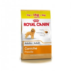 Royal Canin Alimento Seco para Perro Caniche Adult 3+1 kg