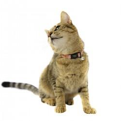 Collar para Gato Brillante con Banda Elastica - Extra Small - Pack x 4 Varios Colores