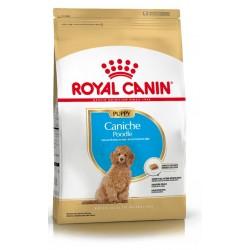 Royal Canin Alimento Seco para Perro Caniche Puppy